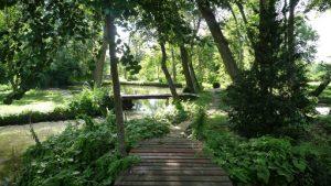 photo d'un paysage : forêt au bord de l'eau